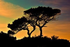 twotrees